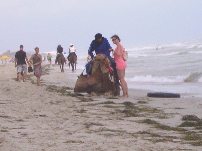 chevaux et chameaux