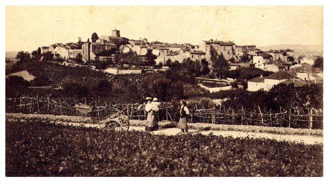 42370 Saint Haon le Châte,l les vignes